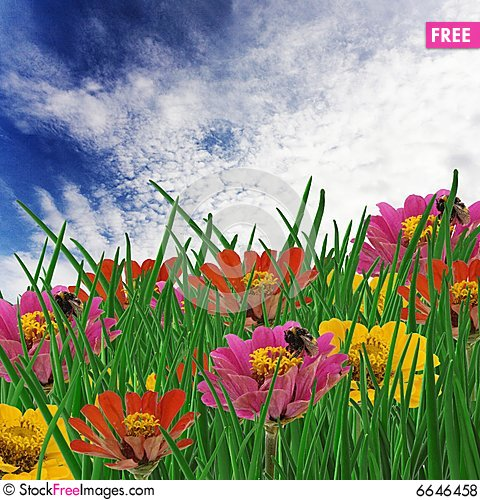 Free Meadow Royalty Free Stock Photos - 6646458