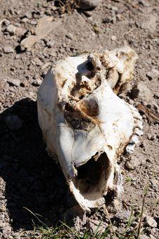 Broken Skull Royalty Free Stock Images