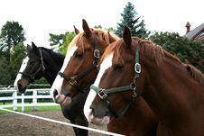 Free Three Horses Stock Photography - 6640792