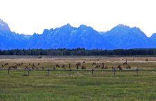 Free The Grand Teton National Park Stock Images - 6640854