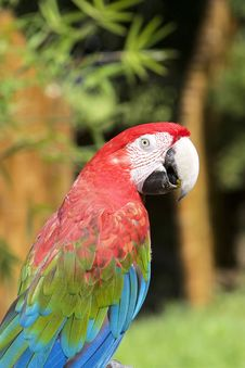 Free Parrot Stock Photos - 6641583