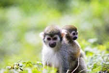 Free Monkey Stock Images - 6642224