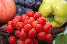 Free Autumnal Fruits Royalty Free Stock Image - 6642436