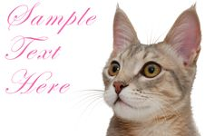 Nice Pink-ears Cat Stock Photography