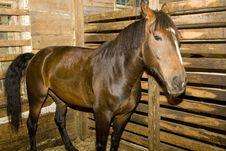 Free Horse Stock Image - 6644401