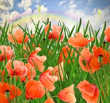 Free Poppy Flowers, Green Grass And Cloudy Blue Sky Royalty Free Stock Photography - 6645037