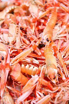 Free Crayfish Royalty Free Stock Images - 6645429