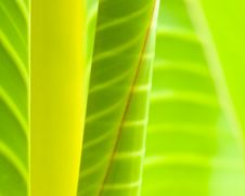 Free Leaves Stock Image - 6646141