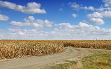 Free Corn Field Stock Photos - 6646663