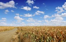 Free Corn Field Royalty Free Stock Photo - 6646685