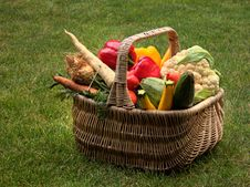 Free Vegetables In A Basket Royalty Free Stock Photography - 6646967