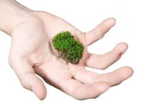 Moss In Hand Royalty Free Stock Image