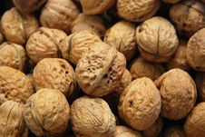 Free Walnuts Royalty Free Stock Images - 6648159