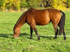 Free Horse Pasture Stock Photo - 6648500