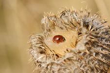 Free Ladybird Stock Photos - 6649223