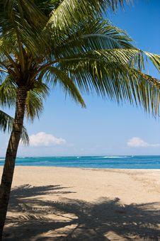 Free Beautiful Lagoon With Palm Tree Stock Photo - 6649310