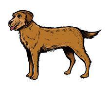 Free English Setter Dog Royalty Free Stock Photos - 6649708