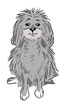 Free Poodle Dog Royalty Free Stock Photo - 6649725