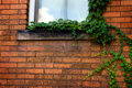 Free Green Ivy On Brick Wall Royalty Free Stock Photography - 6652947