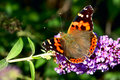 Free Butterfly On Flower Stock Images - 6658924