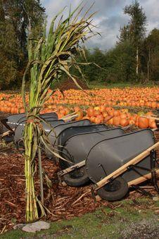 Free Pumpkin Patch Stock Image - 6650101