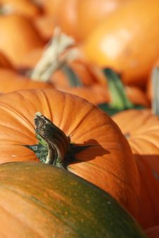 Free Pumpkin Patch 6 Stock Photos - 6650213