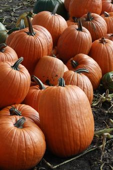 Free Pumpkins 1 Royalty Free Stock Photo - 6650225