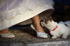 Free Bride And Her Pet Stock Image - 6650231