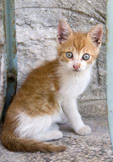 Free Little Kitten Royalty Free Stock Image - 6650496