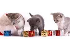 Free Kitten Plays On A White Background Royalty Free Stock Photography - 6651787