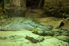 Free Croc Stock Photos - 6651833