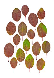 Leaves Isolated Royalty Free Stock Photos