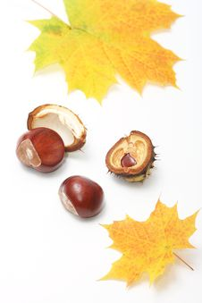 Free Autumn Decorations Stock Images - 6653754
