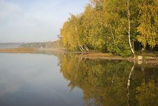 Free Golden Autumn, (gold On Wood) Stock Photo - 6653930