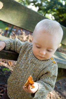 Free Baby Boy Leaf Autumn Royalty Free Stock Photos - 6654368