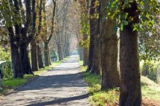 Free Chestnut Alley Sunny Day Autumn Stock Image - 6654381