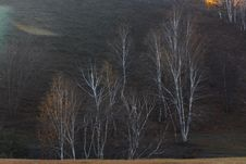Free Bashang Grassland In Inter-Mongolia  Of China Royalty Free Stock Photo - 6654525