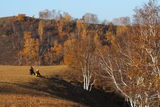 Free Bashang Grassland In Inter-Mongolia  Of China Royalty Free Stock Image - 6654576