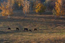 Free Bashang Grassland In Inter-Mongolia  Of China Stock Photo - 6654590