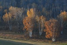 Free Bashang Grassland In Inter-Mongolia  Of China Royalty Free Stock Photos - 6654598