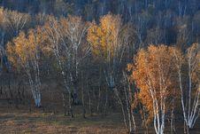 Free Bashang Grassland In Inter-Mongolia  Of China Royalty Free Stock Photography - 6654607