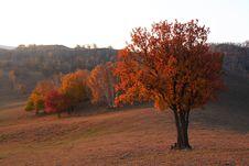 Free Bashang Grassland In Inter-Mongolia  Of China Royalty Free Stock Photo - 6654735