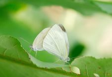 Free White Butterfly Stock Photos - 6654743