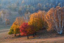 Free Bashang Grassland Stock Images - 6654744