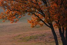 Free Bashang Grassland In Inter-Mongolia  Of China Stock Photos - 6654763