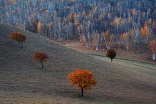 Free Bashang Grassland In Inter-Mongolia  Of China Stock Photos - 6654773
