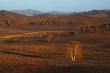 Free Bashang Grassland In Inter-Mongolia  Of China Stock Photography - 6654892
