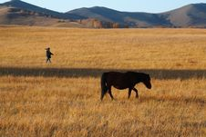 Free Bashang Grassland In Inter-Mongolia  Of China Royalty Free Stock Images - 6654909