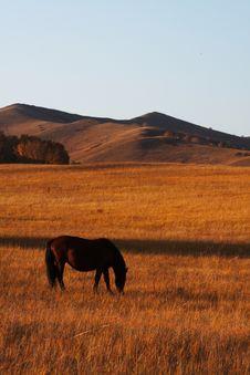 Free Bashang Grassland In Inter-Mongolia  Of China Royalty Free Stock Image - 6654916