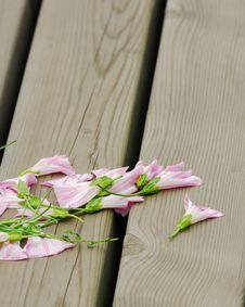 Free Morning Glory On Wood Block Royalty Free Stock Images - 6654919